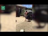Ягуар пробил стену жилого дома в Краснодарском крае ФАН публикует видео