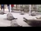 v-s.mobiПрыгающие тюлени прикол психоделика 1 час (часовая версия).mp4