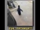 Ura_Pyatnica_Pingvin_(VIDEOMEG).mp4