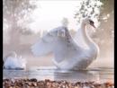 Мой фильм Лебеды