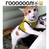"""В мире животных 🦁 on Instagram """"Гооооллл😁 Подписывайся 👉@in.the.animal.world кот кошка питомец котенок щенок животныймир вмиреживот..."""
