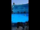 дельфинарий нэмо