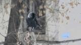 Мартовский снегопад и птицы