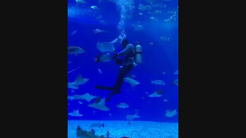 Кормление скатов часть 1 🐟 приморскийокеанариум океанариум
