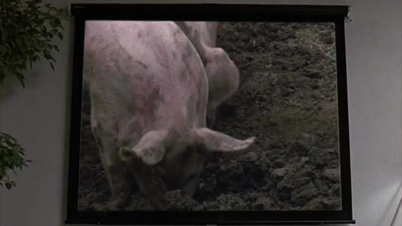 Трудный ребёнок 2 Свинки