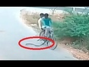 Cyclist and his passenger run for their lives after cobra lunges at them