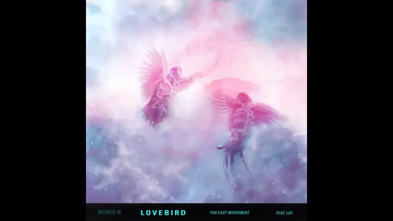 Zyxzjs Lovebird