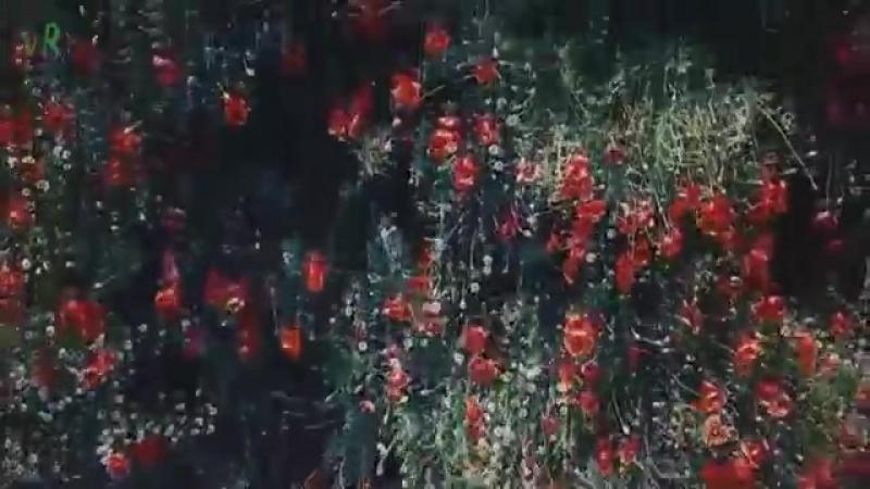 Aibazova Djukkaev-Ne rvi cvetu