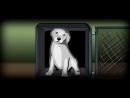 Очень грустная история про Собаку До слёз mp4