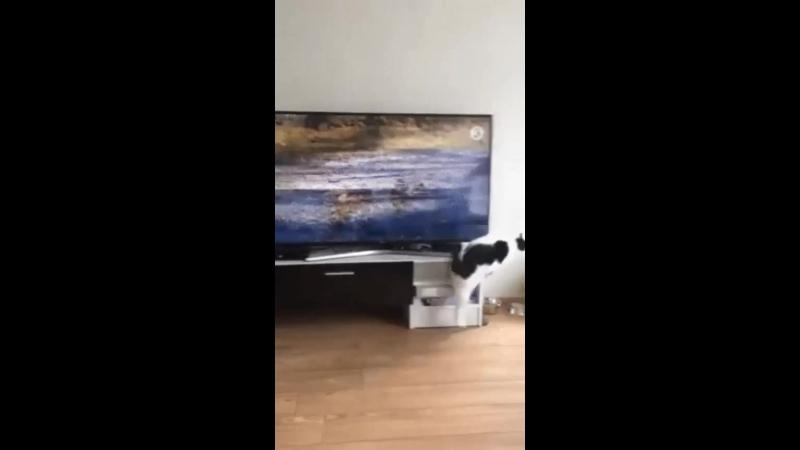 В итоге он вылез в окно и дал звиздюлей невиновному коту.