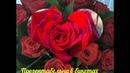 Роза Гран При чайный гибрид