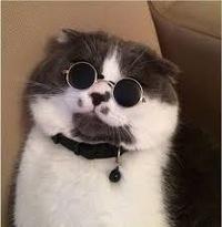 Даня Кот
