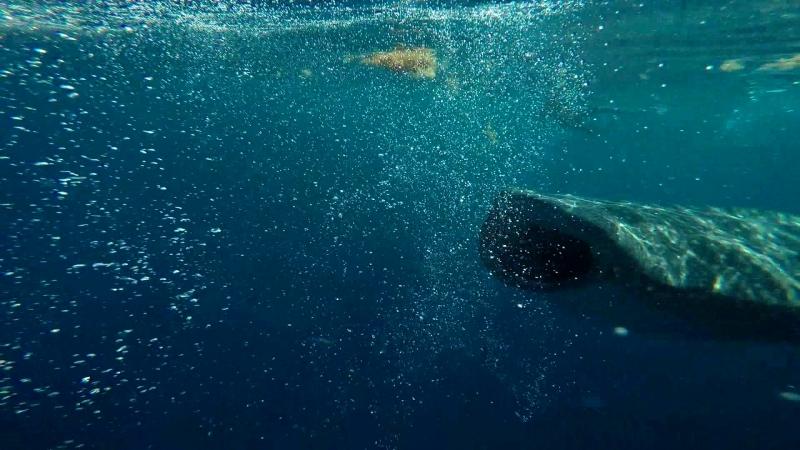 15 сентября Плаваем с китовой акулой Мексика