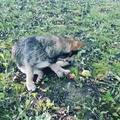 belka_ann62 video