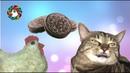 КУРОЧКА ДРАЗНИТ ЛИЛБАКСИКА ПЕЧЕНЬКОЙ ОРЕО / CHICKEN PLAYS OREO WITH CAT