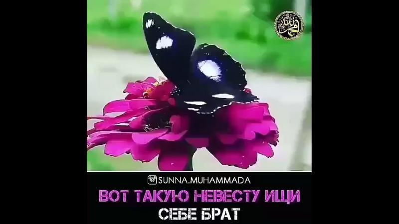 Желаю всем таких жен Братья!)