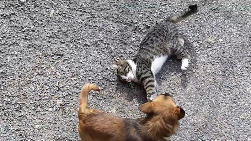 Puppy and kitty - Kučence i maca