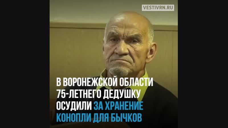 Дедуля в Воронежской области собрал коноплю, чтобы сделать коров вальяжными!