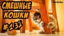 Приколы с котами 2018 Смешные Коты и Кошки Funny Cats