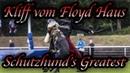 Schutzhunds Greatest Dogs *Kliff vom Floyd Haus*