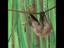 обезьяна и ленивец