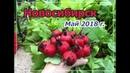 Готовим теплицу к посадке томатов и огурцов Сибирь Холодный май 2018