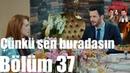 Kiralık Aşk 37 Bölüm Çünkü Sen Buradasın