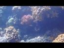 Кораллы в Красном море Заповедник Рас Мухаммед