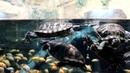 Минский зоопарк Экзотариум