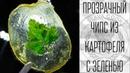 Crispy potato glas chips with green leaf slava cook прозрачный чипс с зеленью зелень в янтаре