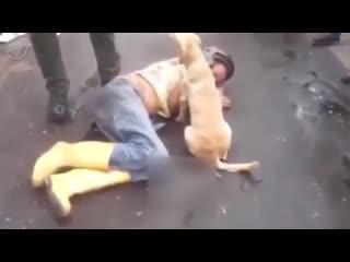 Пьяный мужик уснул прямо посреди дороги, и преданный пёс охраняет своего хозяина