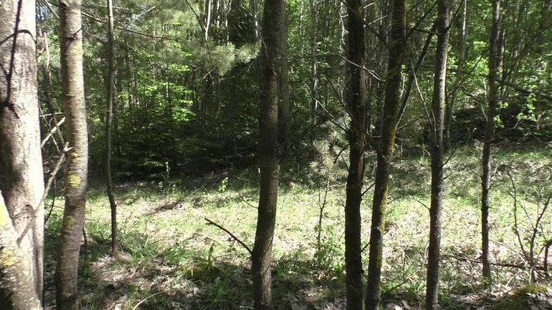 Сморгонь. Лес-8 (Дискордия). Первая траншея по сев. краю леса . Часть 4