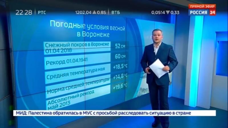 Комариное нашествие в Воронежской области откуда взялись полчища насекомых - Россия 24