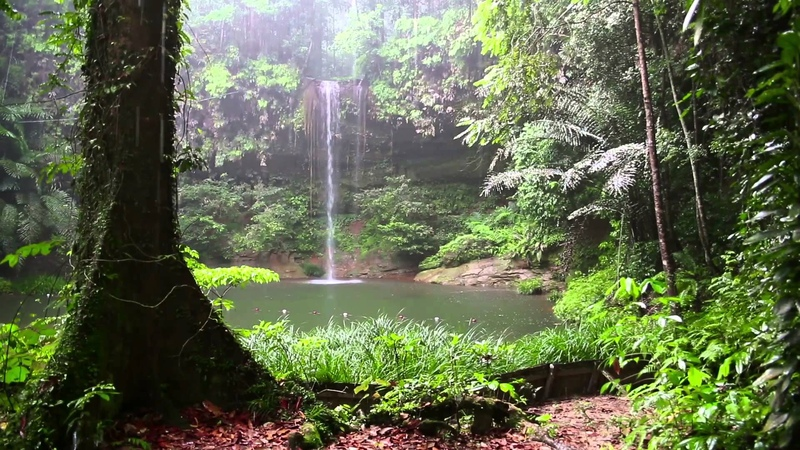 Rain Sound and Rainforest Animals Sound - Relaxing Sleep