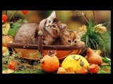 A venit toamna (Stamatis Spanoudakis - Autumn Road)