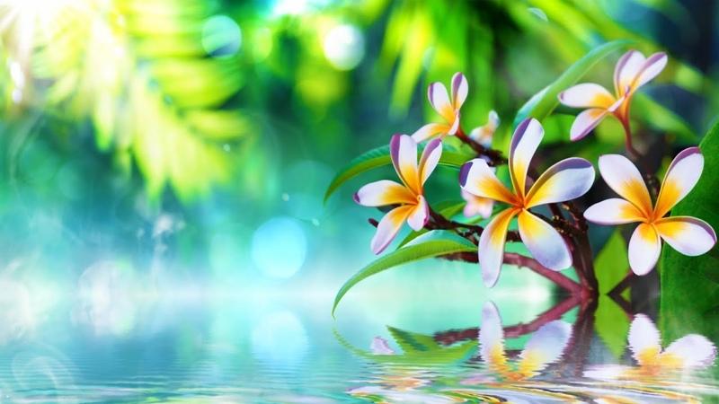 Спа музыка для релаксации ► Музыка для фона | Успокоение нервной системы | Журчание воды