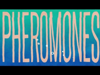 Franc Moody - Pheromones (Official Video)