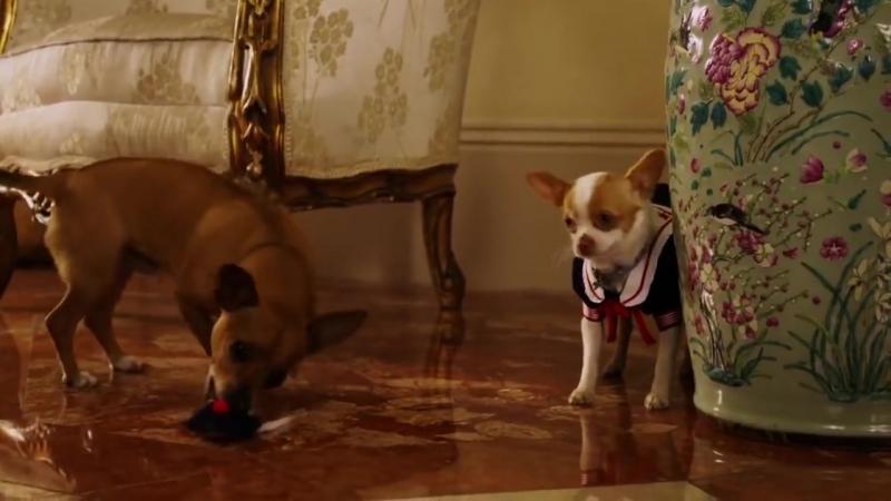 Раз собака, два собака. Веселый клип про собак.