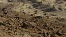Haciatas.salvajes.(2007).1080p.latino