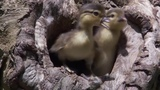 Valhalla Birds