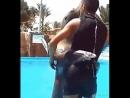 Танец дрессировщика с морским котиком 😉 👌 👍