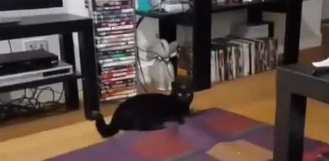 Man vs cat - battle of wills coub