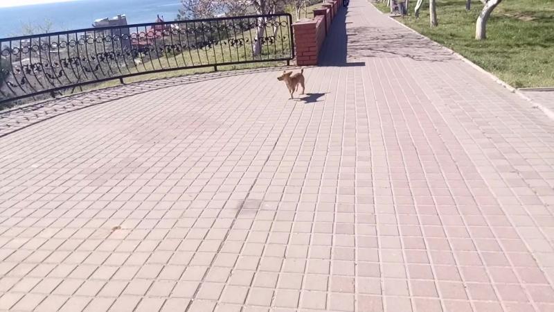 Прогулки по Ильичёвску