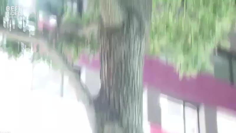 Енот vs японская полиция