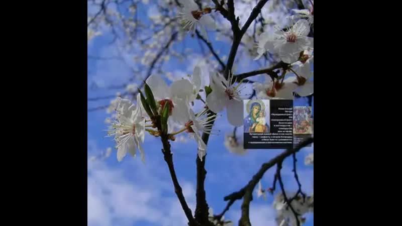 Икона Божией Матери «Неувядаемый Цвет». - 16 апреля - Православный календарь.mp4