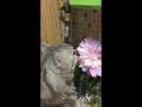 Мартин и цветочек 🥀🌹☘️🎋🌱🌿🍀🌷🌻🌼💐🌾🌺🌸🌸