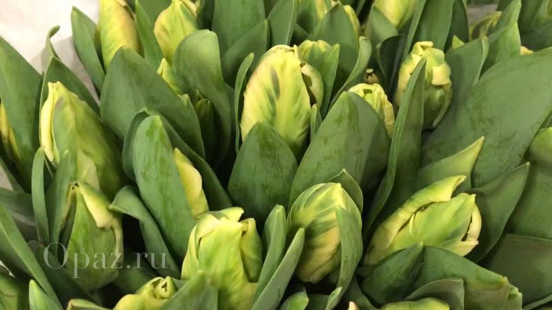 Тюльпаны к 8️⃣ марта 2️⃣0️⃣1️⃣9️⃣ Друзья как и обещали выкладываем видео тюльпанов с загрузки 2019года