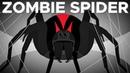 The Cruel Fate of the Zombie Spider