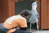 I'm A Bird M #coub, #коуб