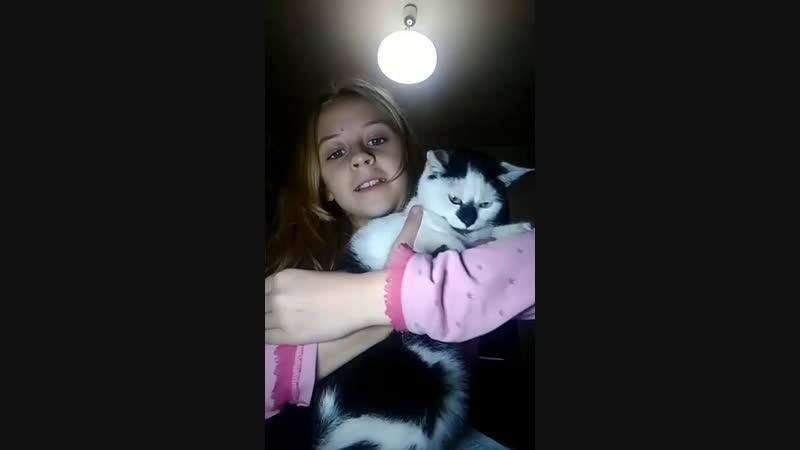 котик Лизка